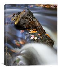 Flowing River, Canvas Print