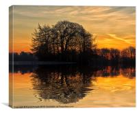 Tree Reflections, Canvas Print