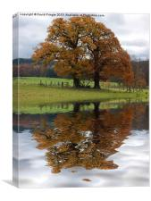 Autumn Tree Reflection, Canvas Print