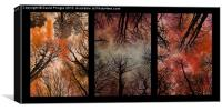 Tree Canopy Triptych, Canvas Print