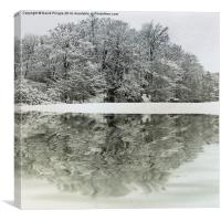 Winter Reflection, Canvas Print
