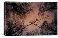 Winter Tree Canopy, Canvas Print
