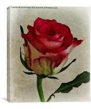Rose Flower, Canvas Print