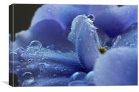Water On African Violet, Canvas Print