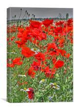 Poppies & Daisies, Canvas Print