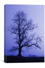 Tree Skeleton, Canvas Print