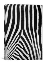 Zebra Stripes, Canvas Print