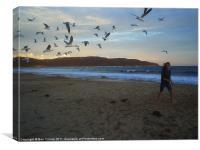 Emily Sea gull, Canvas Print