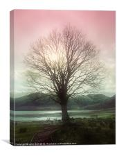 Village Green Tree, Canvas Print