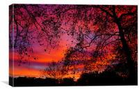 Sunrise in Green Park, Canvas Print