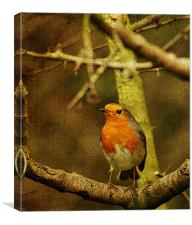 Textured Robin