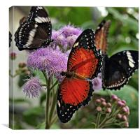 Butterfly party, Canvas Print