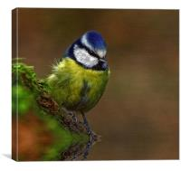 Bluetit Textured