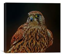 Falcon, Canvas Print