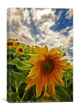 Electic sun flowers, Canvas Print