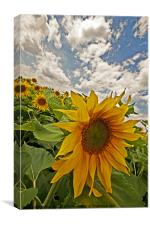 Summers day., Canvas Print