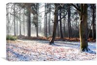 Winter in the woods, Stapleford Woods