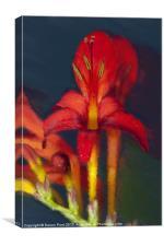 Red Dragon Flower