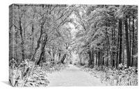 Winter in Stapleford Woods, Newark