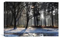 Stapleford Woods, Christmas Day