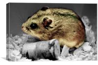 Hamster at rest, Canvas Print