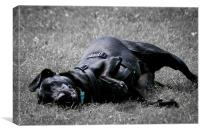 Labrador playing in grass, Canvas Print