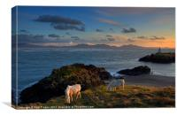 Ponies grazing at Llanddwyn, Canvas Print