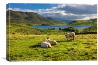 Cattle at Cregennan, Canvas Print