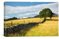 Tree at Bryn Rhyg farm, Canvas Print