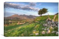 Path up to Manod Lake, Canvas Print