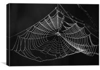 Spiders web, Canvas Print
