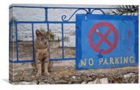 Guard cat, Canvas Print