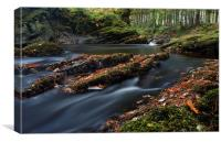 Forest river, Canvas Print