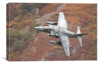 RAF Harrier, Canvas Print