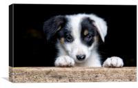 Sheep dog puppy, Canvas Print