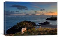 Llanddwyn Ponies, Canvas Print