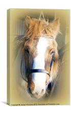 The Farm Horse, Canvas Print