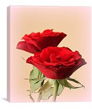 A Gift of Roses , Canvas Print