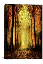 Arch of Trees, Canvas Print