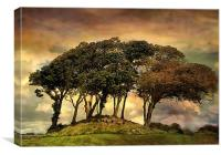 Silverdale., Canvas Print