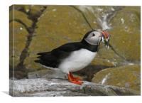 Puffin at Farne Islands with lunch!