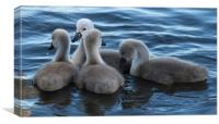 four cygnets, Canvas Print