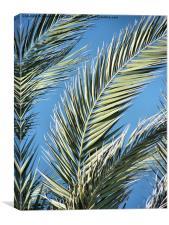 Palm Sun Day, Canvas Print