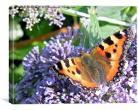 The Butterfly Bush, Canvas Print