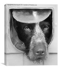 B & W Dog in a Flap, Canvas Print