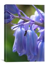 Ant on bluebell