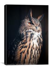 Eurasian Eagle-Owl (Bubo bubo), Canvas Print