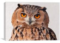 Savigny's Eagle Owl. (Bubo Ascalaphus), Canvas Print