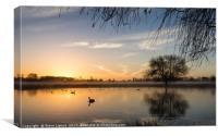 Sunrise at Bushy Park, Canvas Print