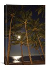 Moon Palms, Canvas Print